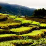 Vegetable terraces in the Cordilleras, Northern Luzon, Philippines. Photo by Kiki Deere.