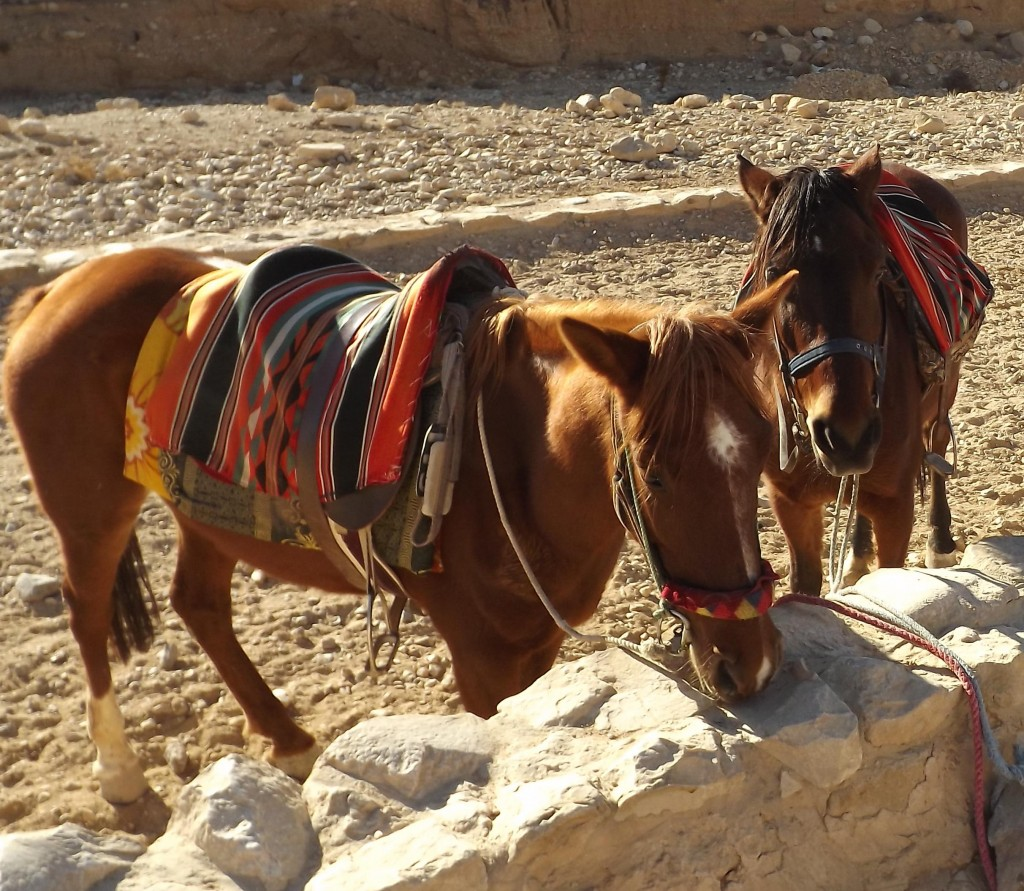 Horses at Petra (Copyright Carole French)