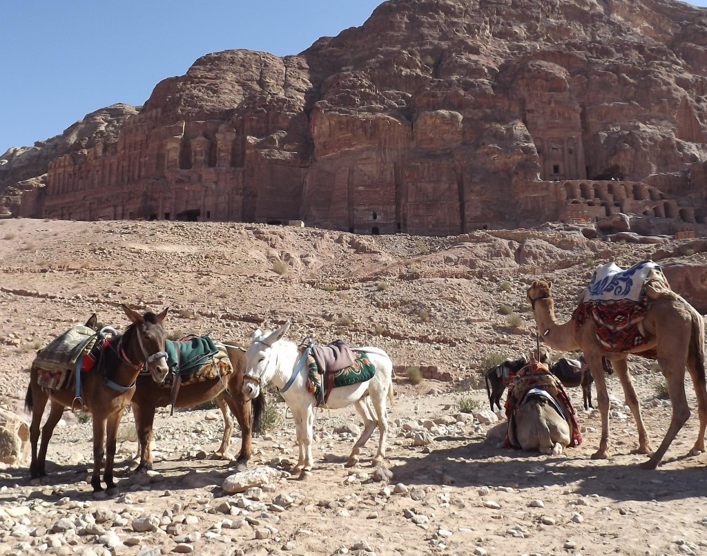 Royal Tombs, horses and camels (Copyright Carole French)